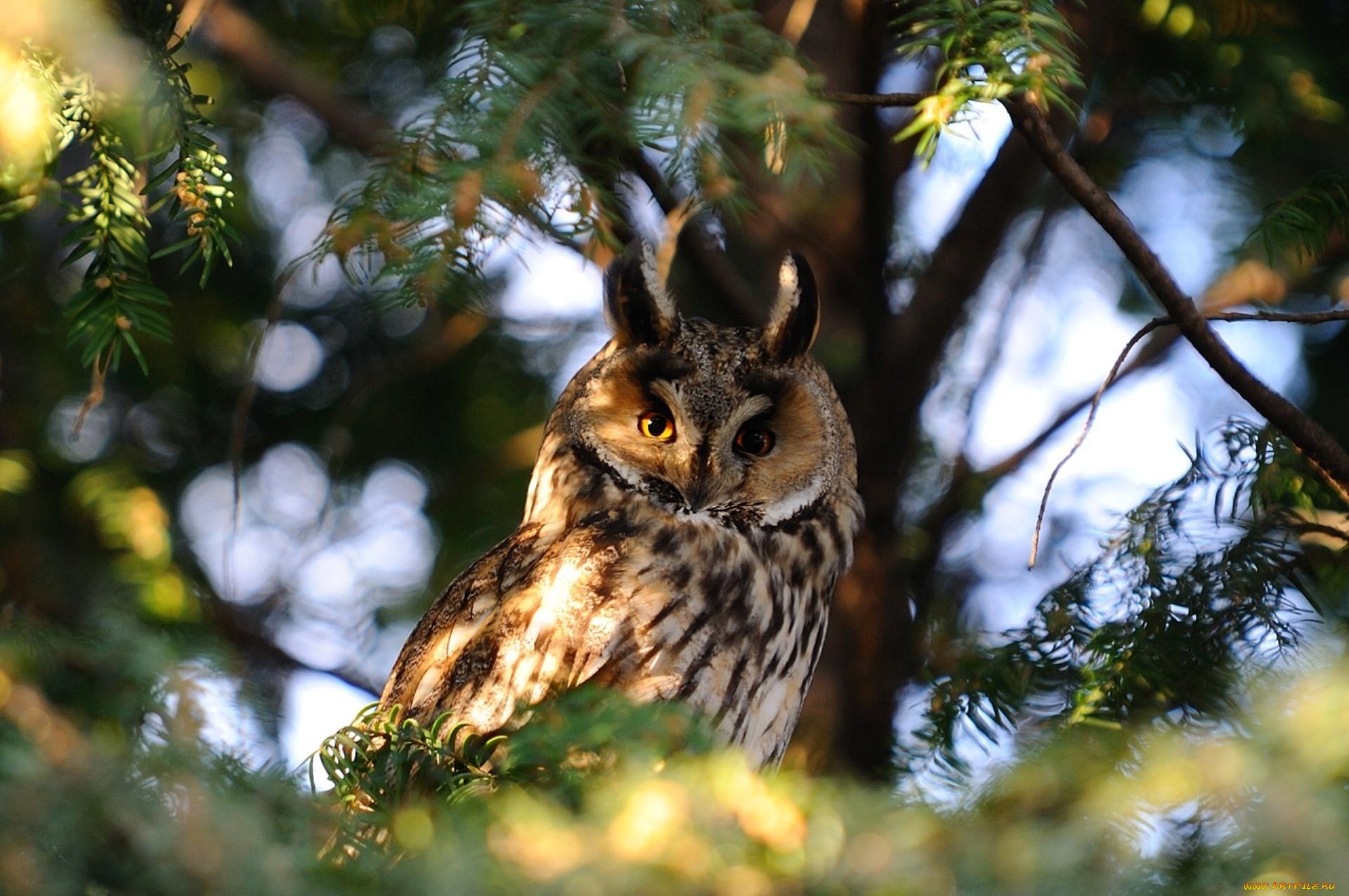 вам картинки лесных животных и птиц текстильных абажуров